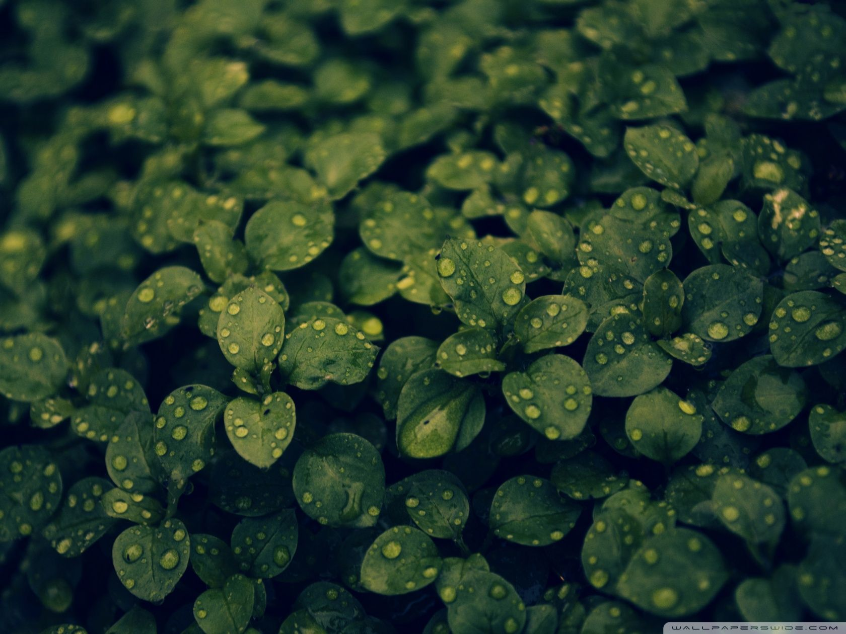 Dark Green Nature Wallpapers High Quality Resolution Is Cool