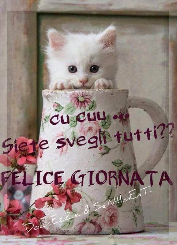Buongiorno auguri di buona giornata pinterest for Buongiorno con gattini