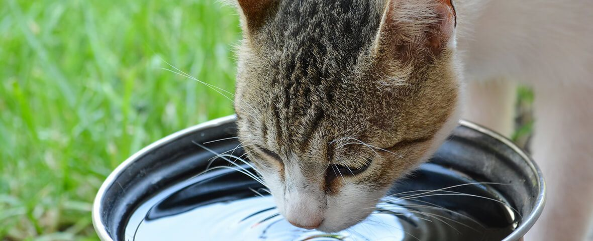 Pet owners can reduce the chance that their cat will get