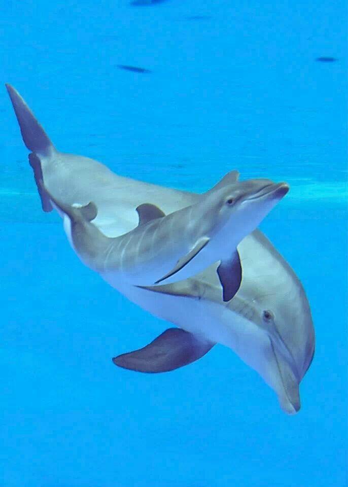 Newborn dolphin 2