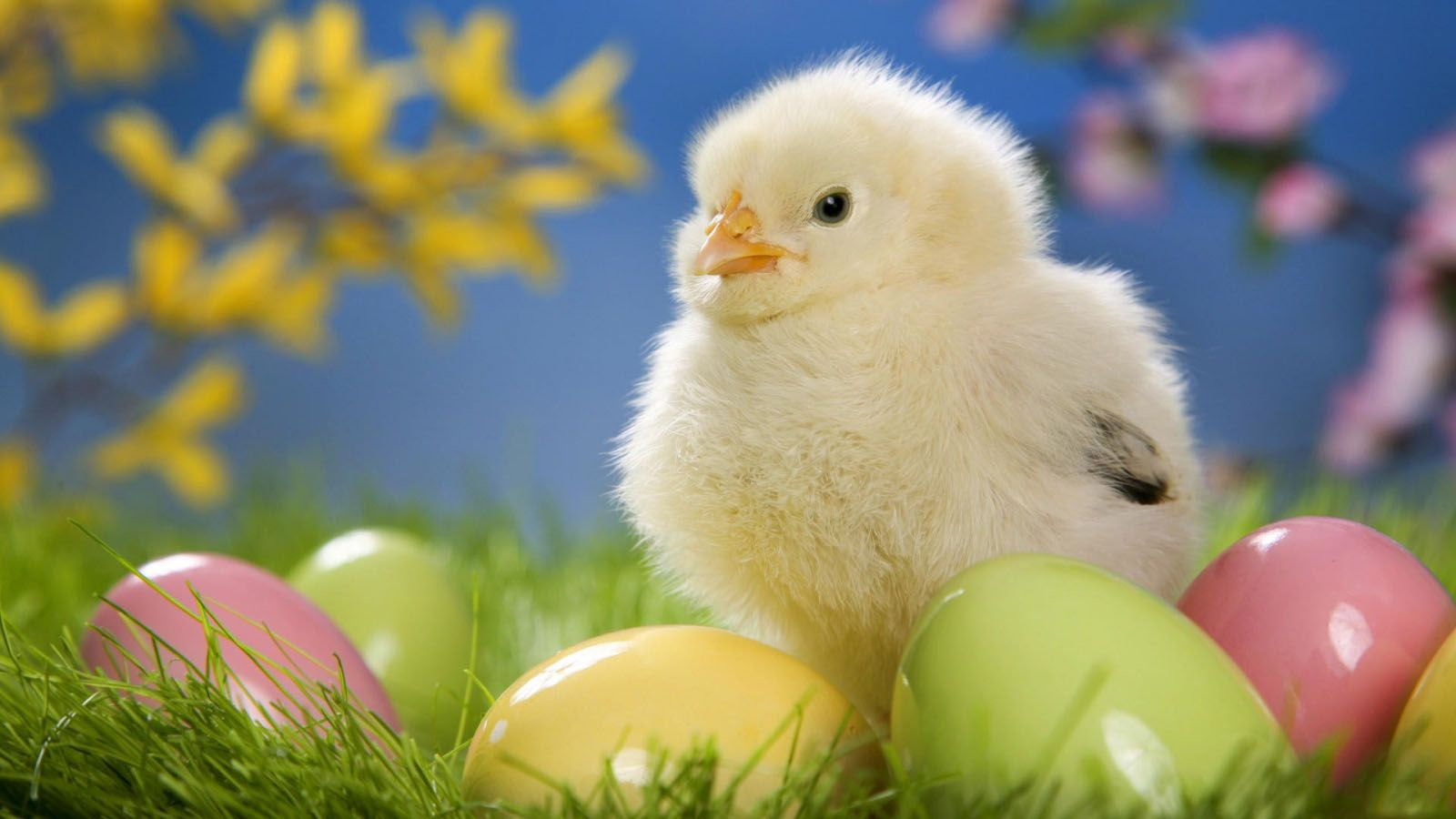 Hapy Easter Sweet Easter Chicken ...