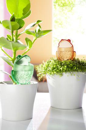 ein frosch zum k ssen der wasserspeicher froggy versorgt ihre pflanzen rund um die uhr. Black Bedroom Furniture Sets. Home Design Ideas