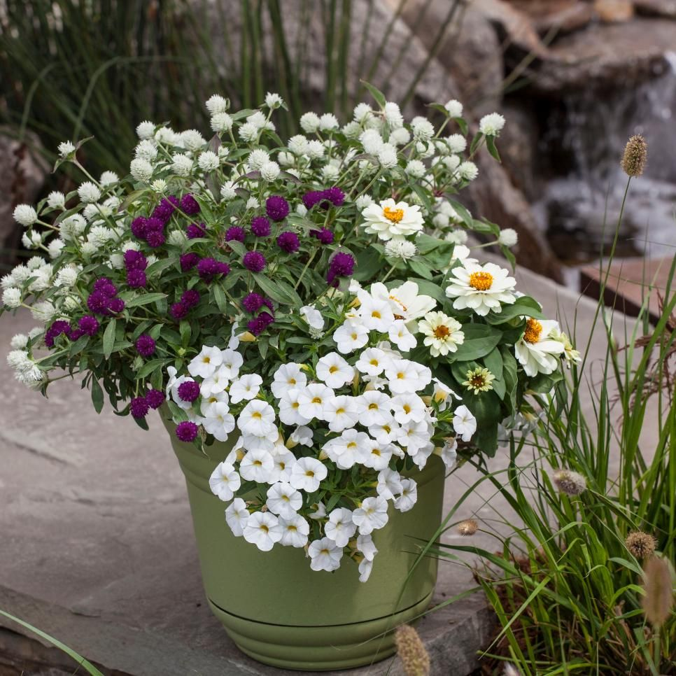 8 Stunning Container Gardening Ideas: Summer Container Garden Recipes