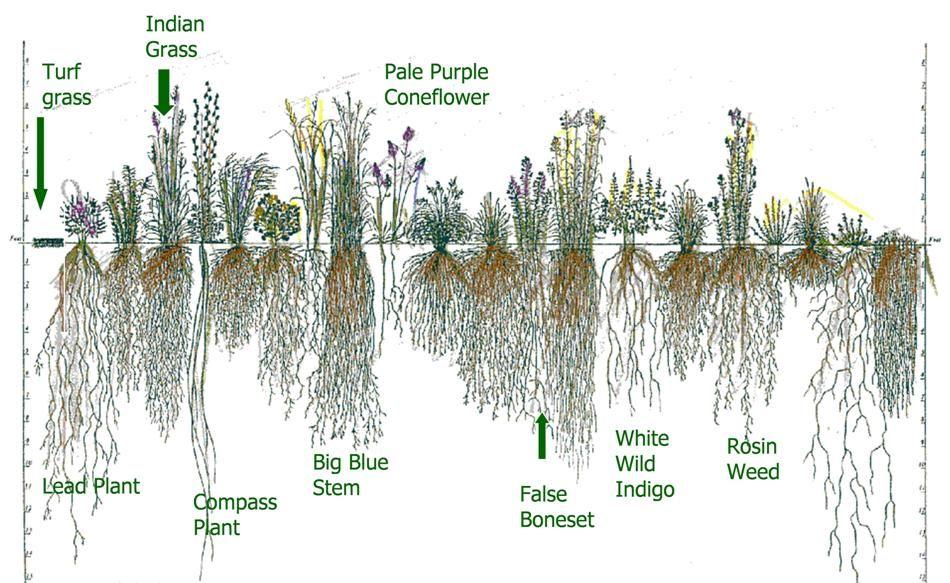 Plants For Erosion Control Google Search Yard