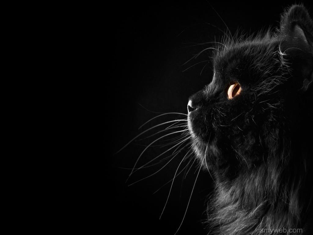 Black Cat Animal Hd Wallpaper Download 1 Cute Black Wallpaper Cute Black Cats Cat Wallpaper