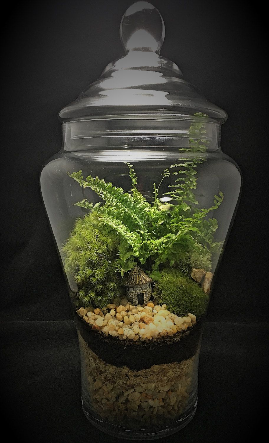 Cottage terrariummoss terrariumterraspherelarge terrarium by
