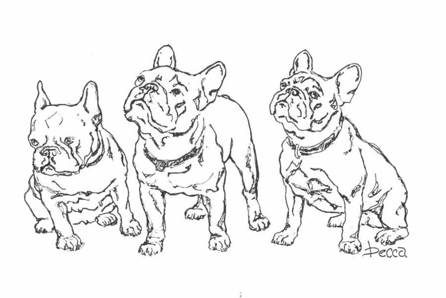 Kleurplaten Engelse Bulldog.French Bulldog Coloring Pages Google Search Creatief