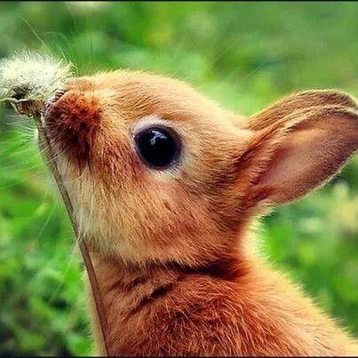 Bunny Wabbits!