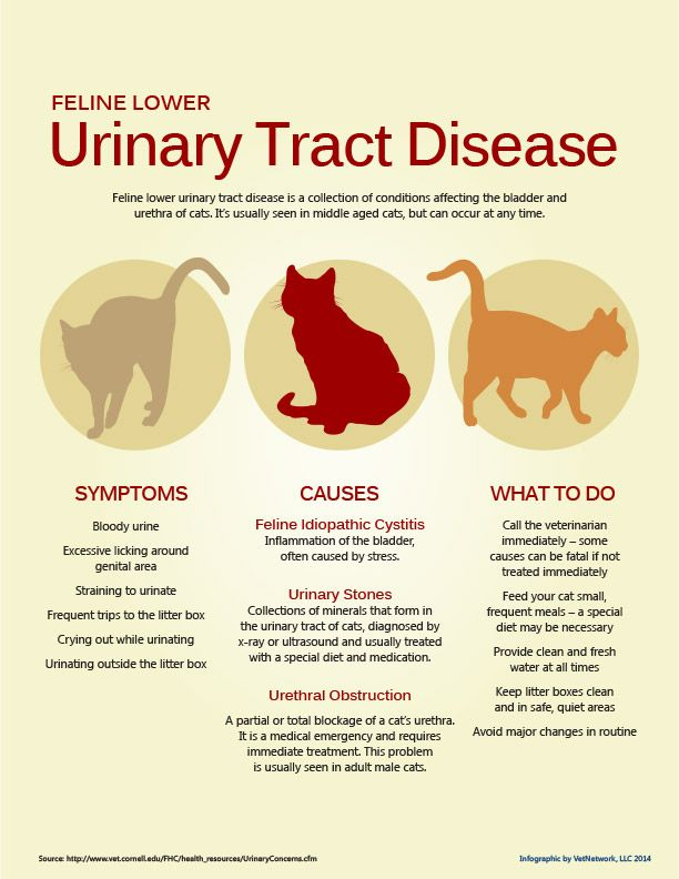 Feline lower urinary tract disease is a collection of conditions ...