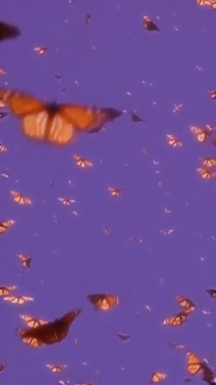 Use This As A Live Background Aesthetic Flowers Videos Aesthetic Butterflies Butterfly Wallpaper Iphone Trippy Wallpaper Butterfly Wallpaper