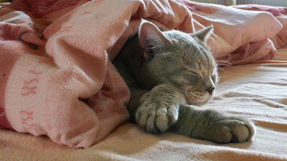 Wer von euch würde tauschen? #Bettdecke #Bett (via fotocommunityen)  Für heute Abend: