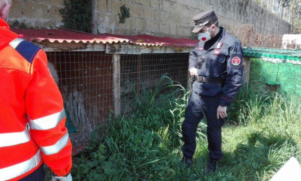 Pozzuoli 39enne denunciato per maltrattamento di animali