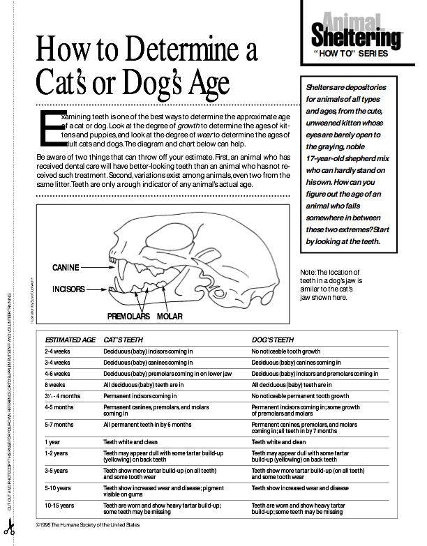 age by teeth development     wwwgooglees blankhtml Pet - vet tech job description