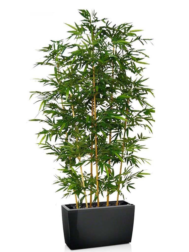 Vasi Per Piante Da Terrazzo risultati immagini per vaso per pianta bambù da interno