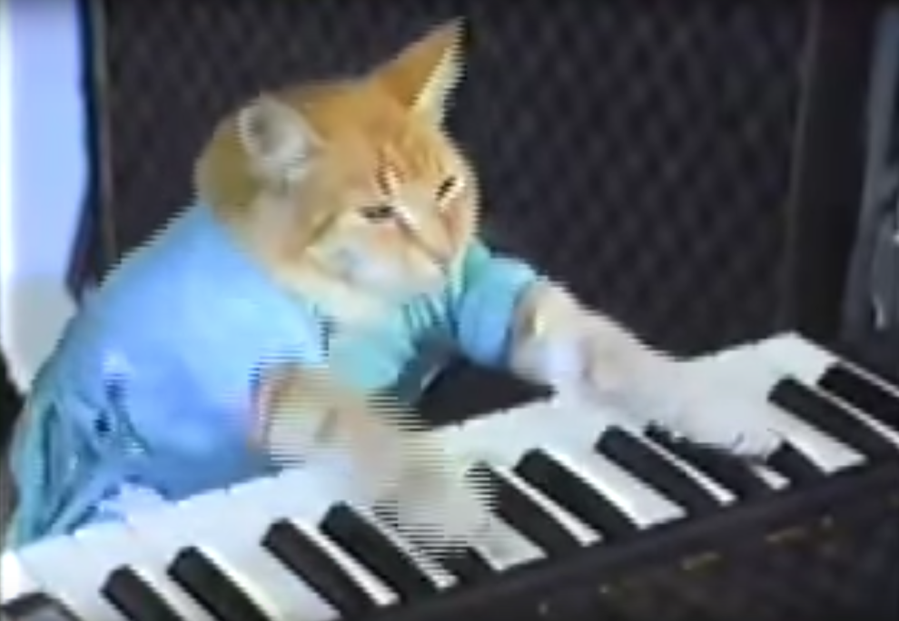 31 Viral Videos You Used To Watch When Your Parents Didn T Know What Youtube Was Internet Cats Funny Cat Memes Funny Cat Videos