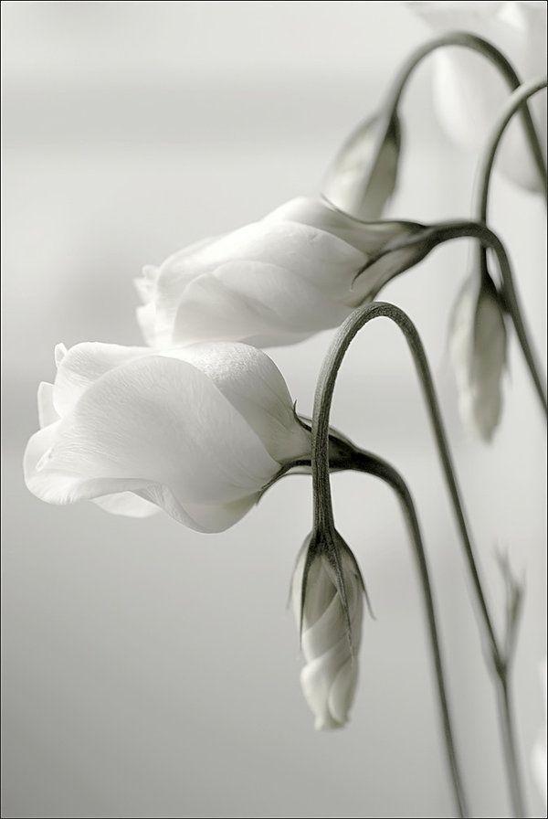 Flores brancas.
