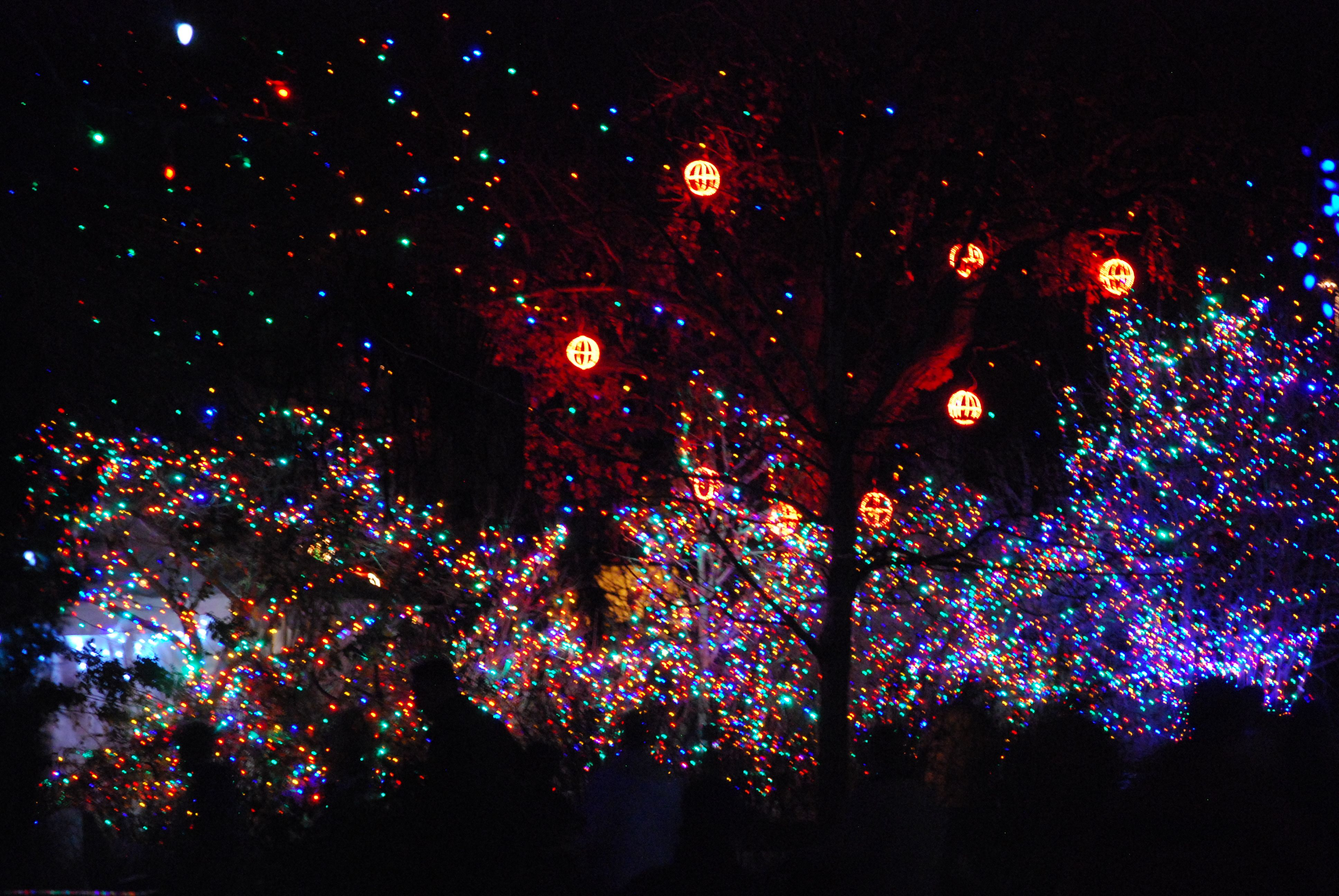 Zoo Lights Colorado Springs