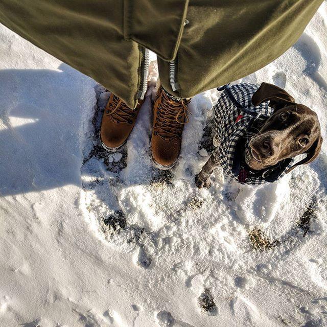 Reposting @dallasgetsthepoint: Mom, I'm ready for my adventure! . .  #gspsofinstagram #gspcommunity #germanshorthairedpointer #gspoftheday #puppygram #gsppuppy #gspofinsta #winter #instagramdogs #petstagram #cute #frost #gundoghunting #huntingdog #hellyhansen #instagood #pointer_feature #bestwoof #cheepet #dogsonadventures #dogsofinstamedia #pointeroftheday #modelsofinstagram #toronto #torontopuppies #homesalivepets #ontario #love #dallasgetsthepoint