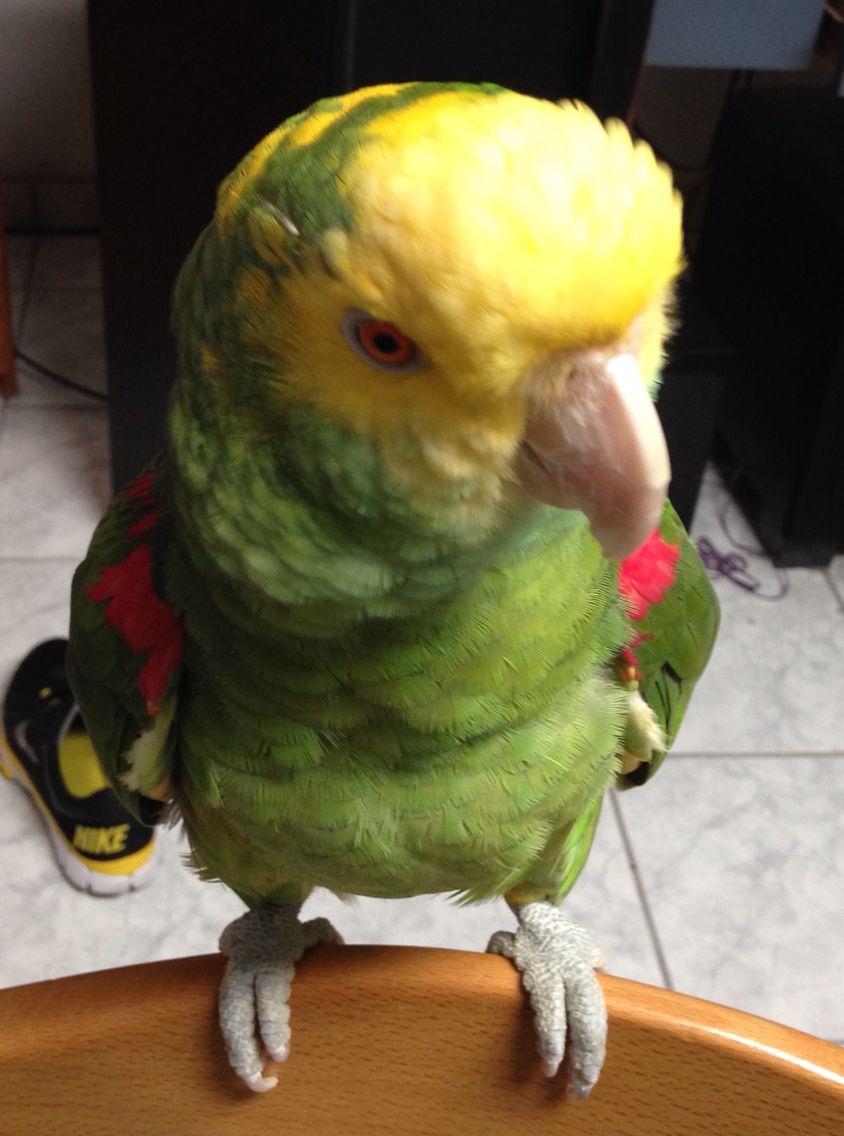 Koki la bebé de casa
