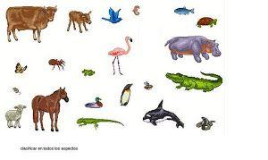 Estudiando con la tía Matilde.: Animales ovíparos y vivíparos