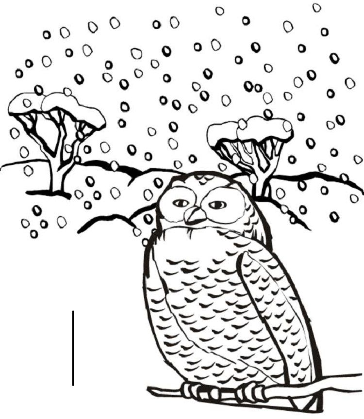 Winter Animals Coloring Pages Owl Coloring Pages Witch Coloring Pages Animal Coloring Pages