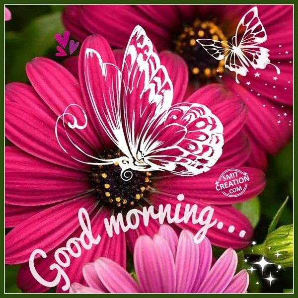 Good Morning Flowers Pictures And Graphics Smitcreationcom Good