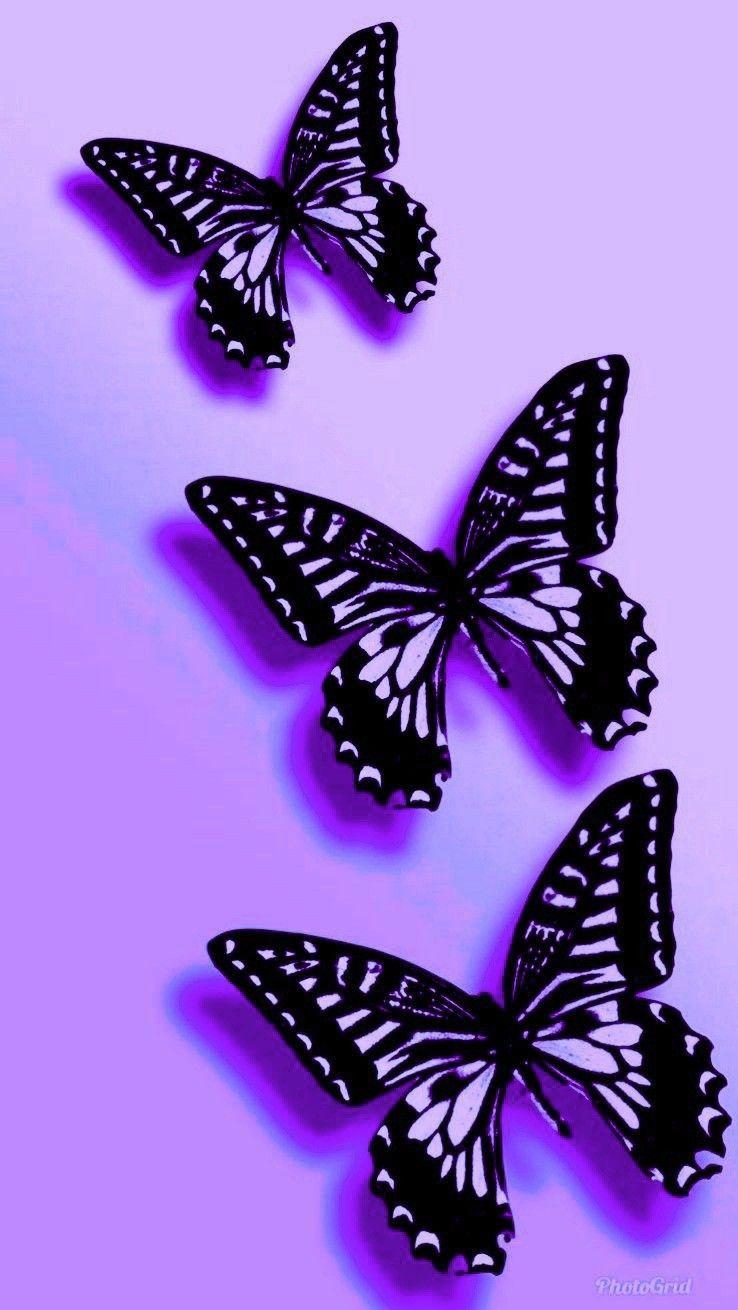Pin by Nicole Budka on Butterfly Wallpaper Butterfly