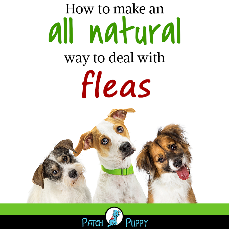 How To Prevent Get Rid Of Fleas And Ticks On Dogs Ticks On Dogs Dog Dry Skin Flea Shampoo For Dogs
