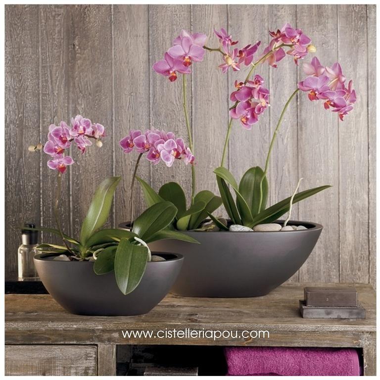 Macetas para orqu dea phalaenopsis macetones tinajas y for Decoracion de macetas para plantas