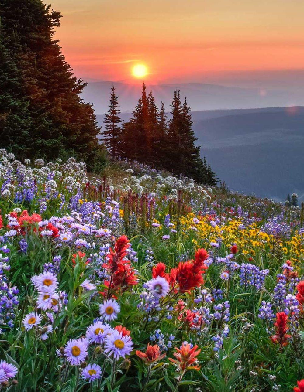 6 Reasons Why You Should Visit Sun Peaks This Summer Road Affair Beautiful Nature Nature Aesthetic Beautiful Sunset