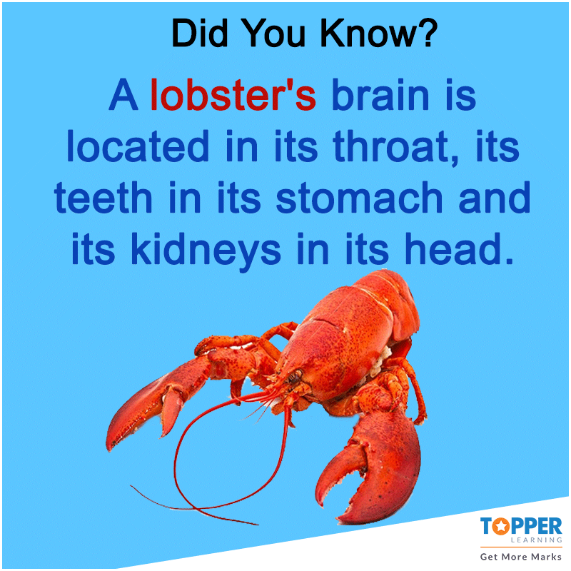 lobster fun facts