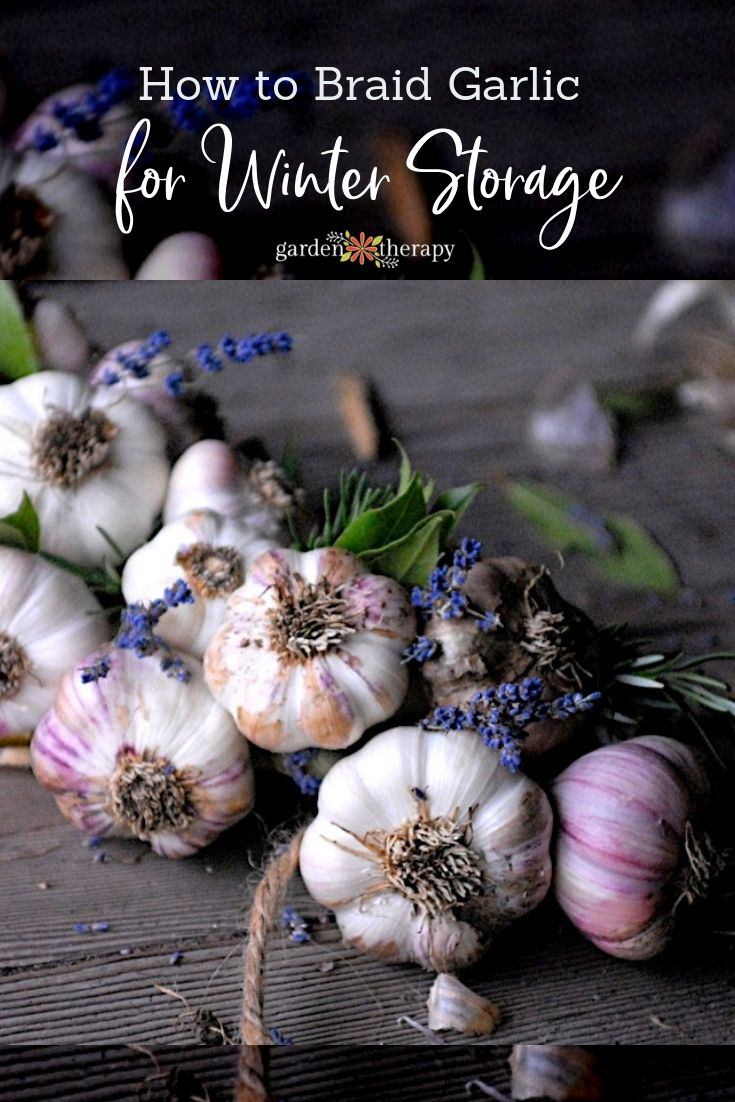 How to store garlic in winter 51