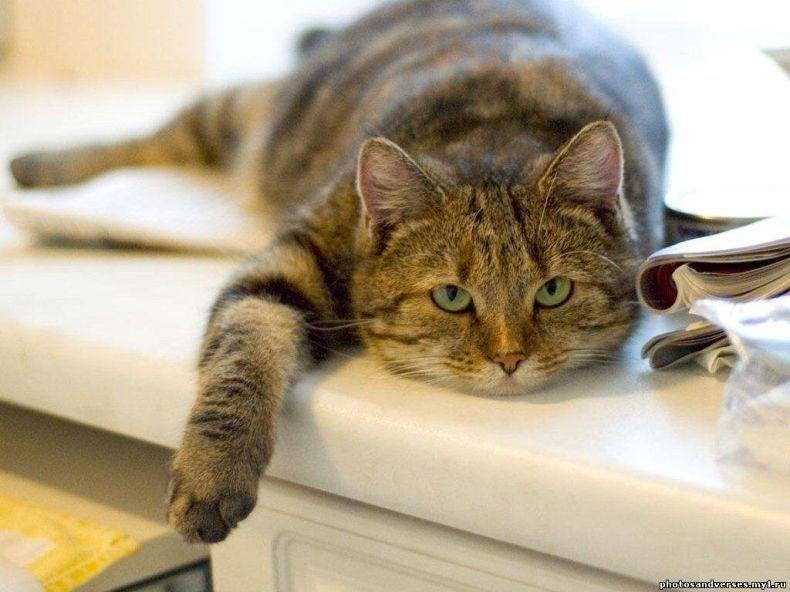 Вся правда о кошках (20 фото) | Смешные фотографии ...
