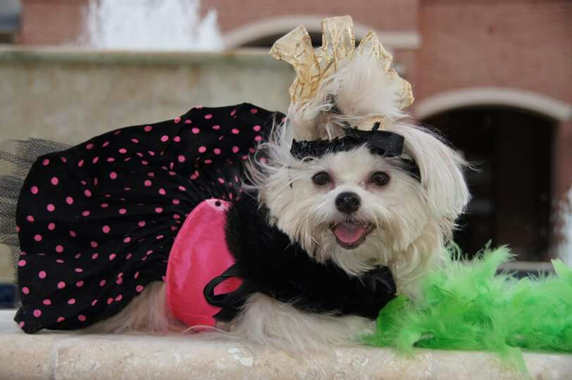 I am a cross breed...crossed between Lady Gaga and Madonna!!