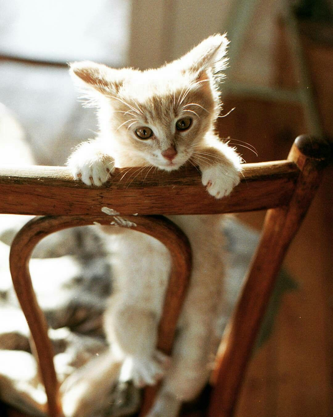 Pin by jijo on animals pinterest cat animal and kitty