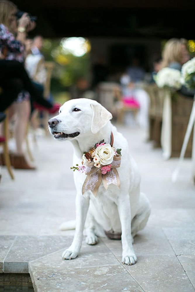 36 Gorgeous Photo Ideas Of Wedding Pets For Your Al