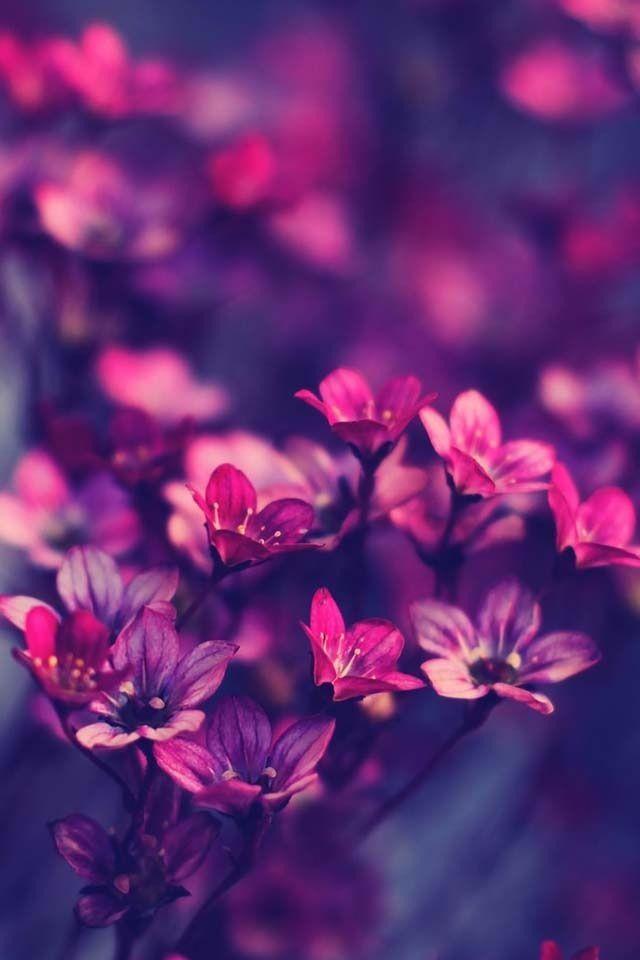 24 Most Beautiful Flowers In This Gallery Hello AugustIphone WallpapersPurple