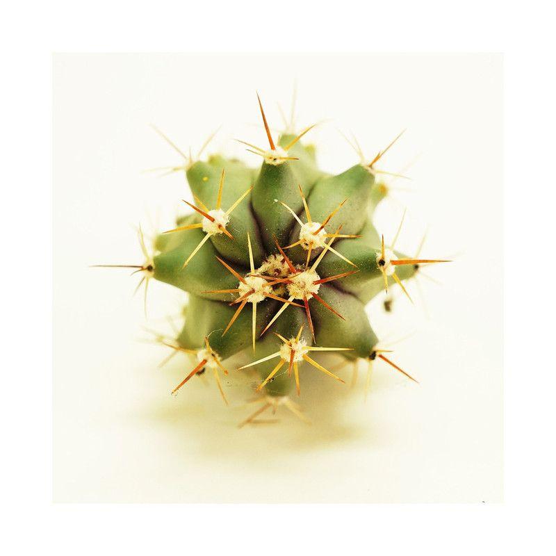 Fero Cactus Wall Art Prints by Helina Chin   Minted   Gallery Wall ...