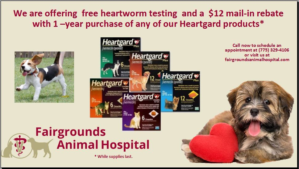 The Best News About Heartworm Disease Is That It S Easily