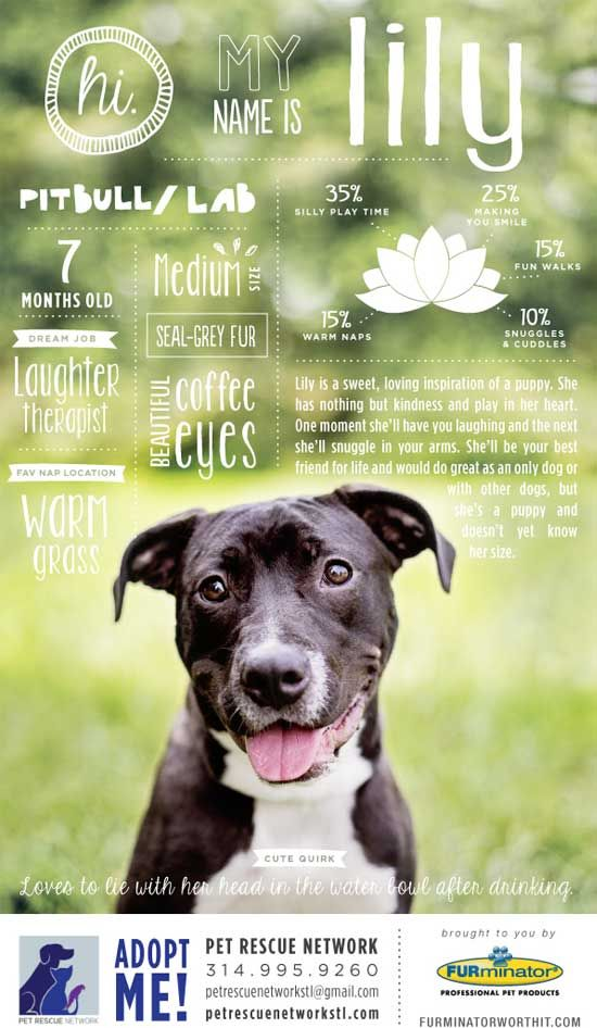 Pin By Takara Hipkins On Photo Quotes Pet Adoption Dog Adoption Dog Poster