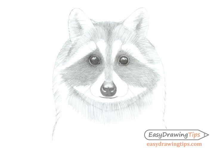 How to Draw a Raccoon Face Step by Step (With images ...