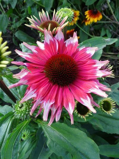 Pin On Flowers Plants Gardening