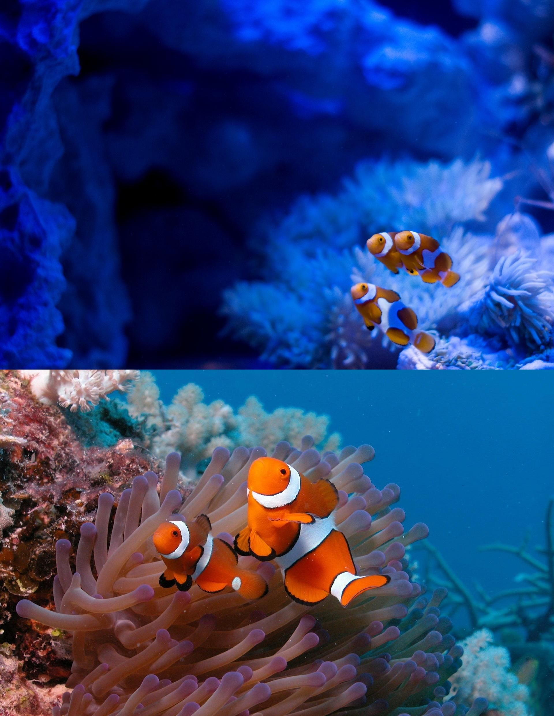 Animals Download 96 689 Wallpapers Page 1 Forwallpaper Com Animals Clown Fish Fish