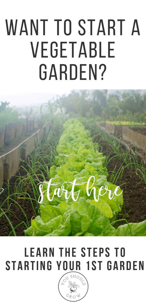 How To Start A Vegetable And Herb Garden From Scratch is part of Beautiful garden Vegetable - Starting a vegetable garden is one of the most exciting things about spring! But it's not necessarily as simple buying some plants and sticking them in the ground  It helps to do some research and have a plan for what will really grow well for you  The biggest mistake you can make is to choose the