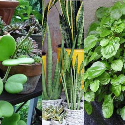 Arquitectura y feng shui la magia de las plantas feng - Arquitectura feng shui ...