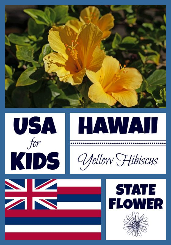 Hawaii State Flower Yellow Hibiscus By Usa Facts For Kids Fun Facts For Kids Printables Free Kids Hawaii Fun