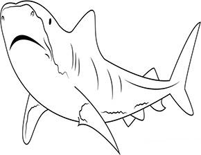 Ausmalbild Tigerhai In 2020 Ausmalen Ausmalbild Ausmalbilder Tiere