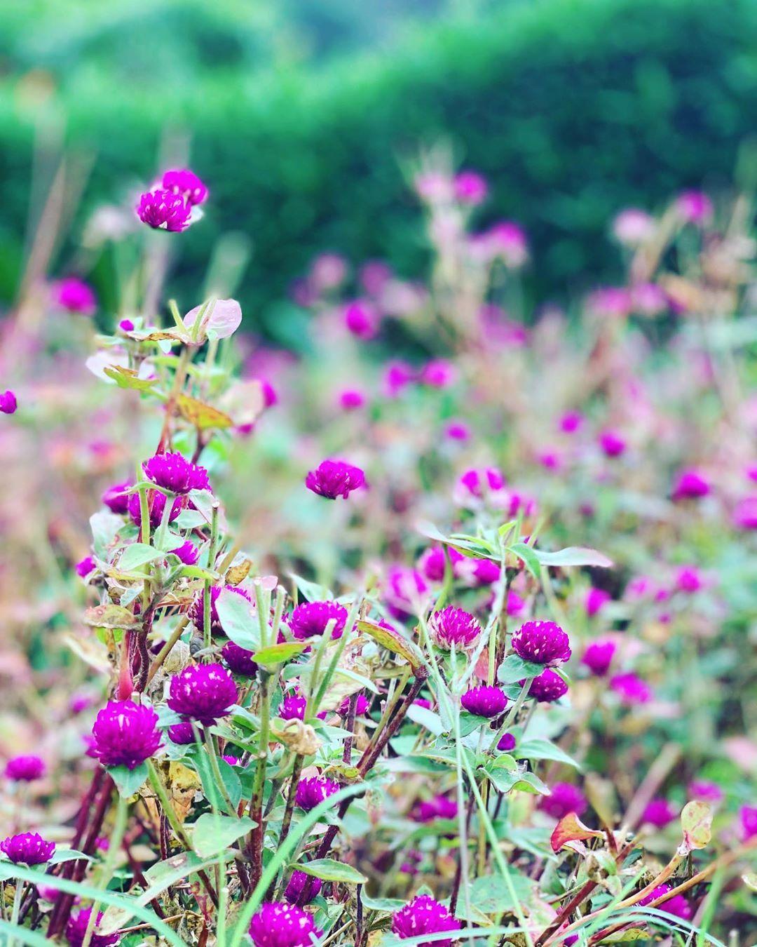 Pin On Flowerpot