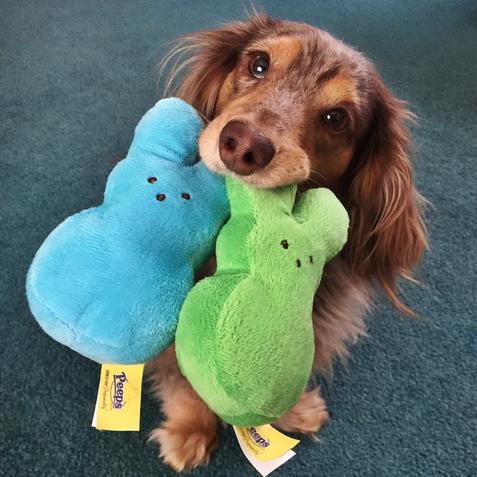 Peeps 3 Pack Bunny Dog Toys Toys Petsmart Cute Dogs Cute Animals Dog Toys