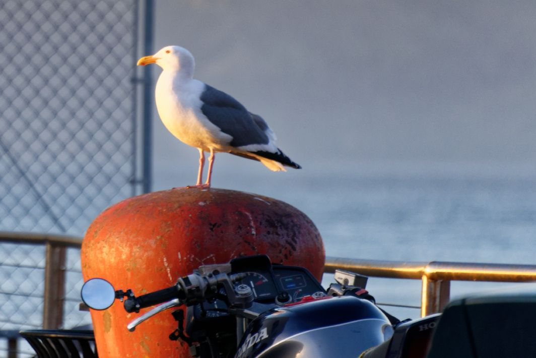 Leaders often stand alone, but so do gulls.